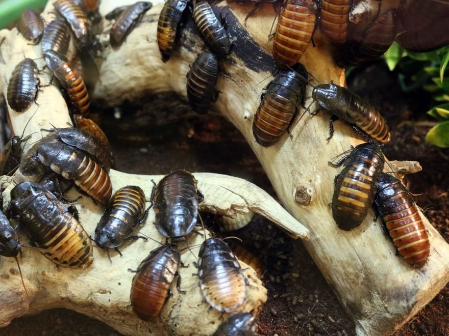 How To Find A Way To Get Rid Of Cockroaches In The House How To Find